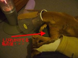 f:id:kazoo2008:20081227104252j:image