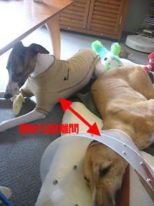 f:id:kazoo2008:20081227104253j:image