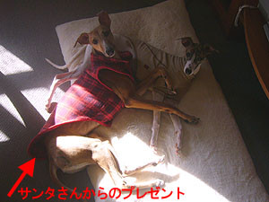 f:id:kazoo2008:20081230130052j:image
