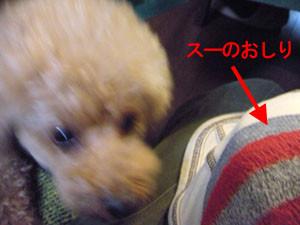 f:id:kazoo2008:20090104185518j:image