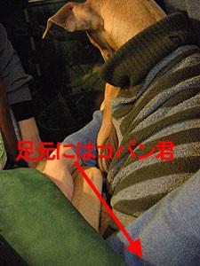 f:id:kazoo2008:20090104185521j:image