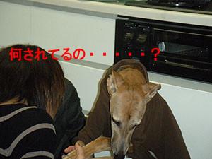 f:id:kazoo2008:20090117152216j:image