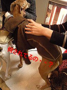 f:id:kazoo2008:20090117152217j:image