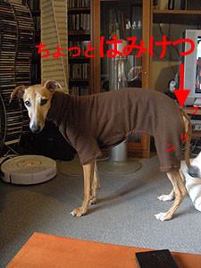 f:id:kazoo2008:20090118114101j:image