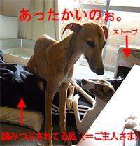 f:id:kazoo2008:20090125225317j:image