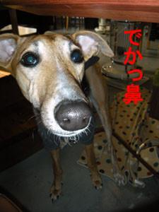 f:id:kazoo2008:20090205213456j:image