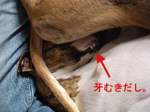 f:id:kazoo2008:20090218121628j:image