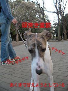 f:id:kazoo2008:20090221115032j:image