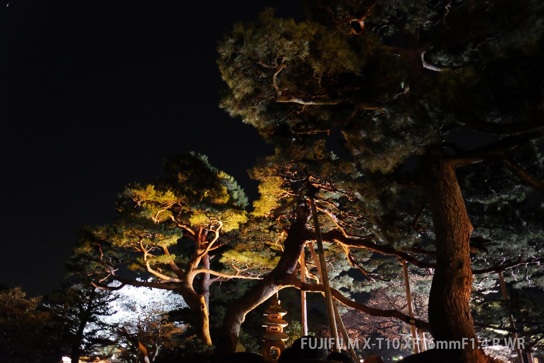 夜の巨大松