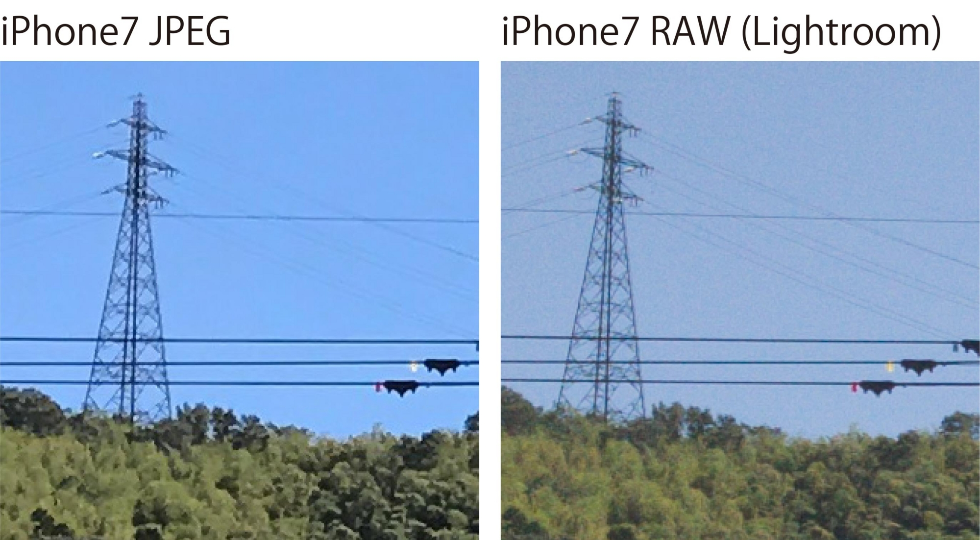 iPhone7 RAWとJPEGの画質違い②