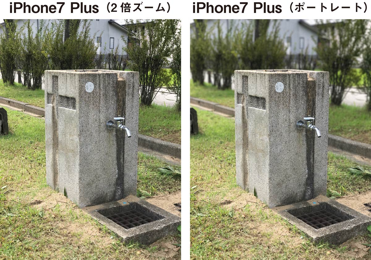 iPhone 7 Plus ポートレートモード1