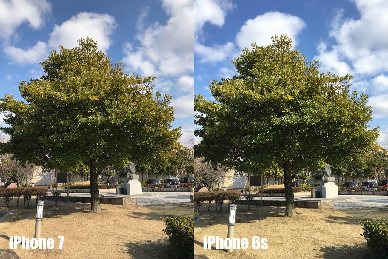 iPhone 7とiPhone 6s カメラの画質を比較(木と青空)