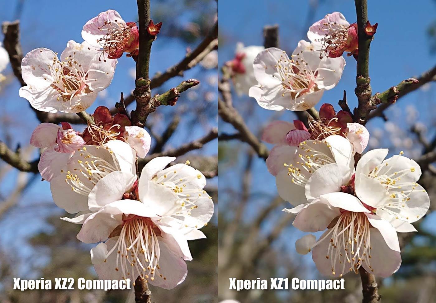 Xperia XZ2 Compact vs XZ1 Compact 梅の花の画質(拡大)