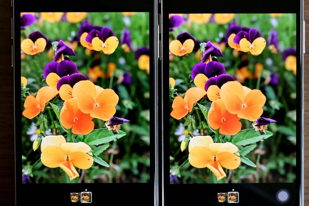 花の画像(iPhone 11 Pro vs iPhone Xの画面比較)
