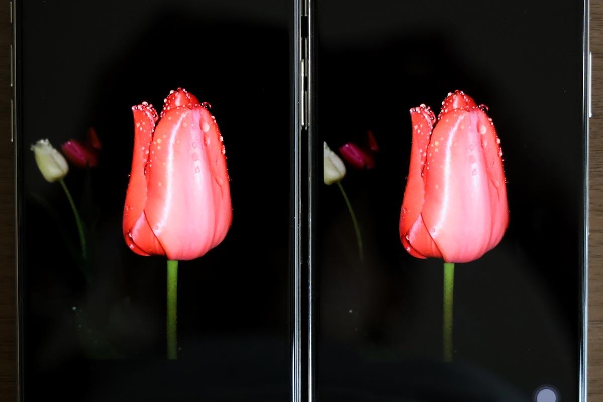 チューリップの画像(iPhone 11 Pro vs iPhone Xの画面比較)