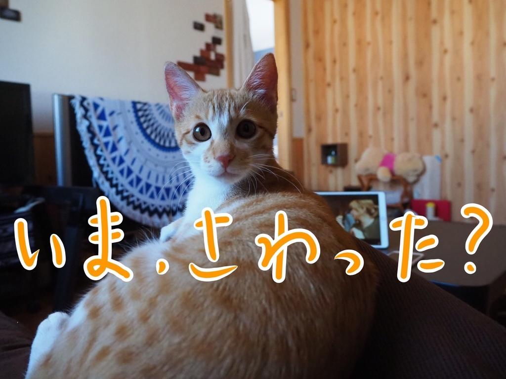 f:id:kazu-tabi:20190208072318j:plain