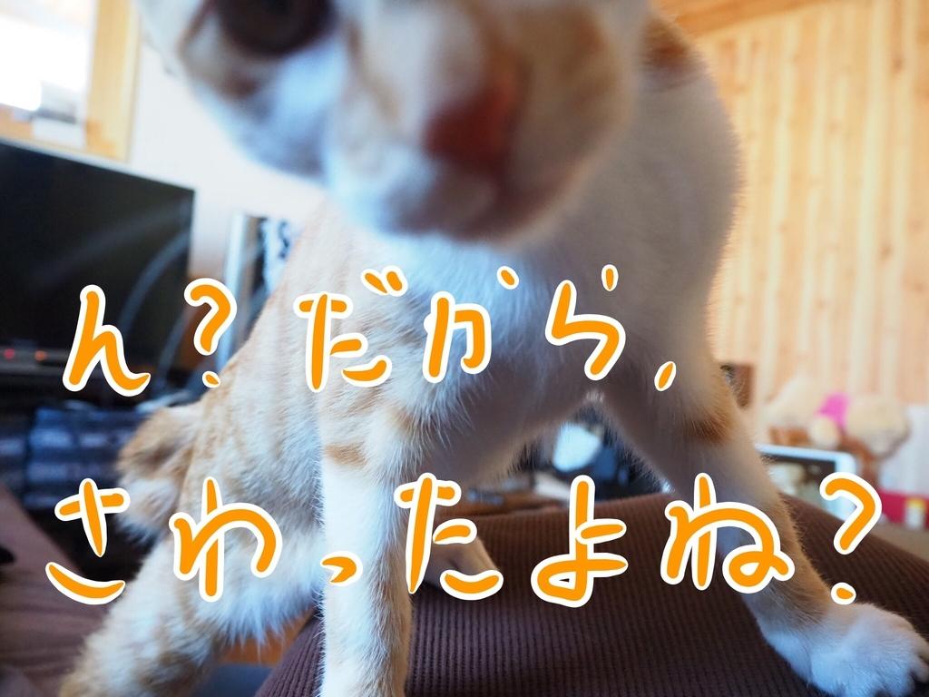 f:id:kazu-tabi:20190208072331j:plain