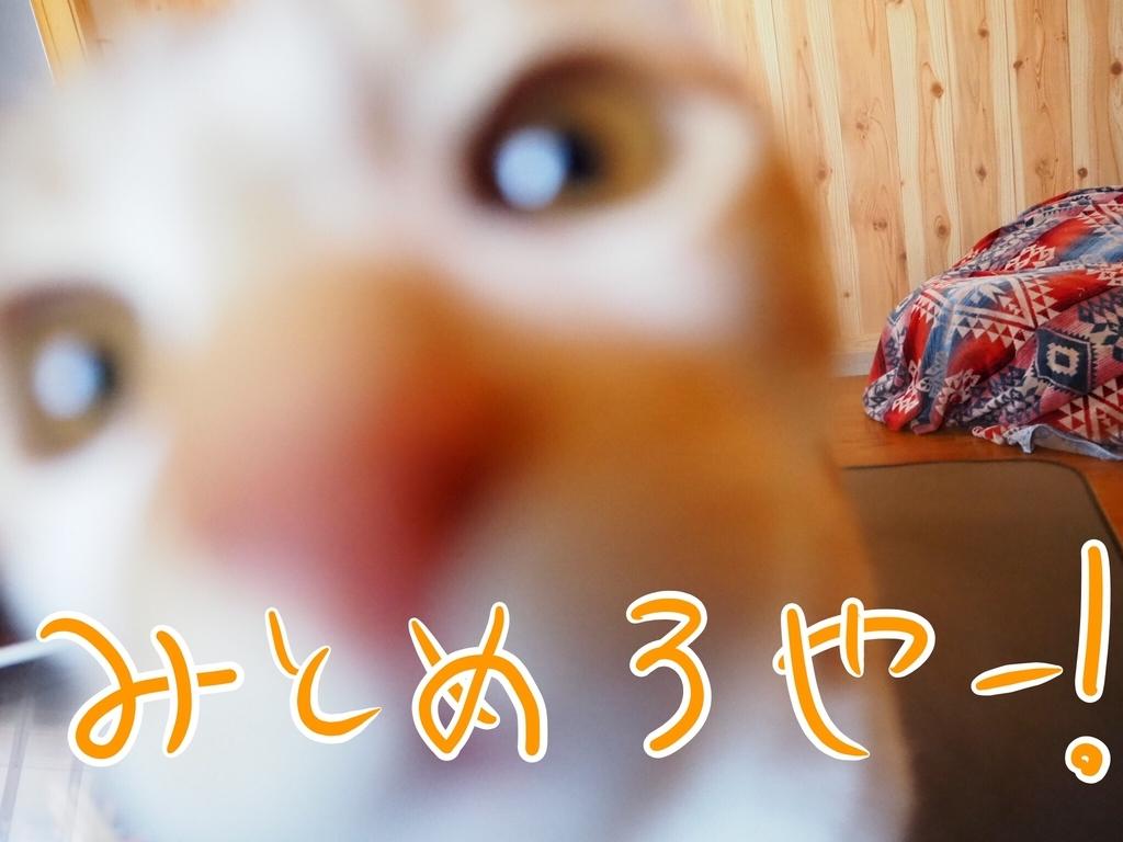 f:id:kazu-tabi:20190208072344j:plain