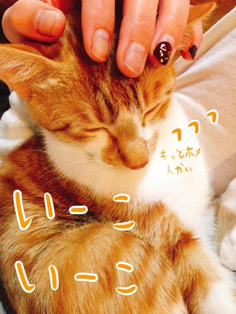 f:id:kazu-tabi:20190211073149j:plain