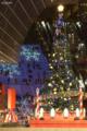 京都新聞写真コンテスト Christmas tree of Kyoto Station