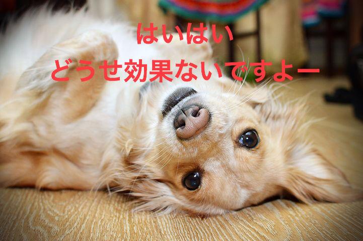 f:id:kazu532120:20180506205357j:plain