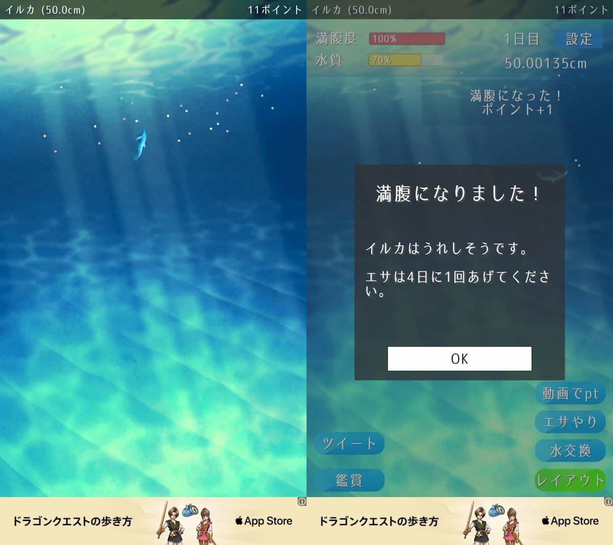 イルカ育成ゲーム アプリ紹介画像