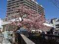糸川遊歩道(熱海市)