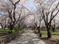 鶴ヶ城城址公園(会津若松市)