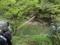 紅葉川渓谷 吊橋(山形市)