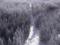 蔵王ロープウェイ山麓線からの景色(山形市)
