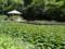 尾入野湿生植物園(盛岡市)