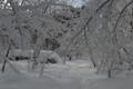 しぶき氷への道(猪苗代町)