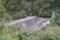 東大鳥砂防ダム(鶴岡市)