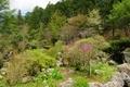 波瀬植物園