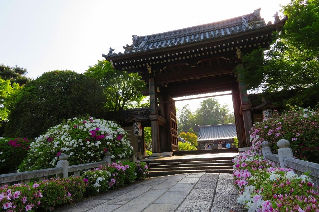 妙満寺 山門と平戸つつじ