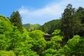 高源寺 新緑と三重塔