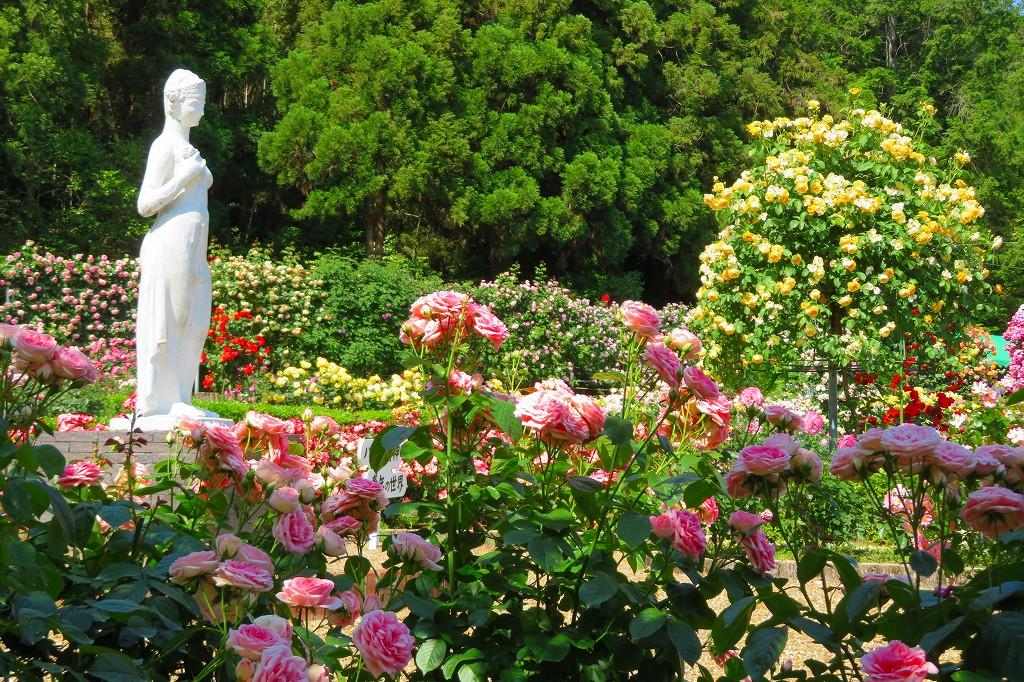 霊山寺 バラ庭園