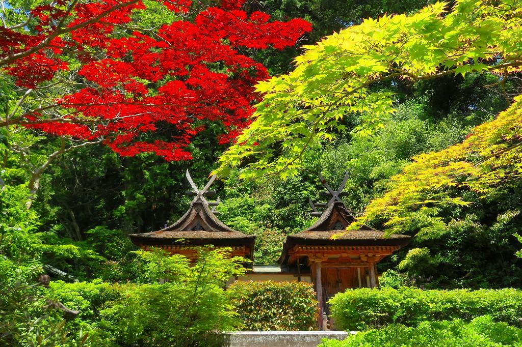 円成寺 白山堂
