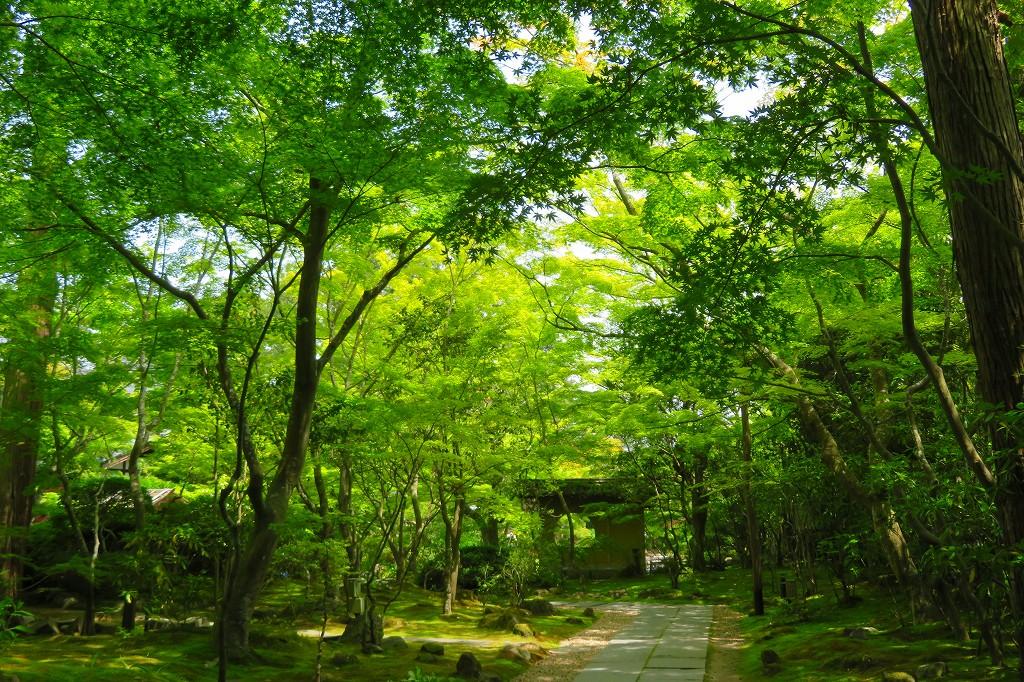 円通院 新緑の境内