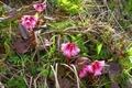 蔵王 御釜周辺の植物