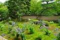 天得院 美しい桔梗の庭