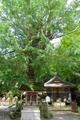 岩間寺 境内の銀杏
