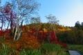 旭岳温泉付近の紅葉