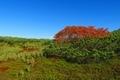 旭岳散策路 緑と紅葉が綺麗