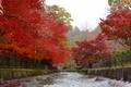 琵琶湖疎水船 疎水沿いの紅葉