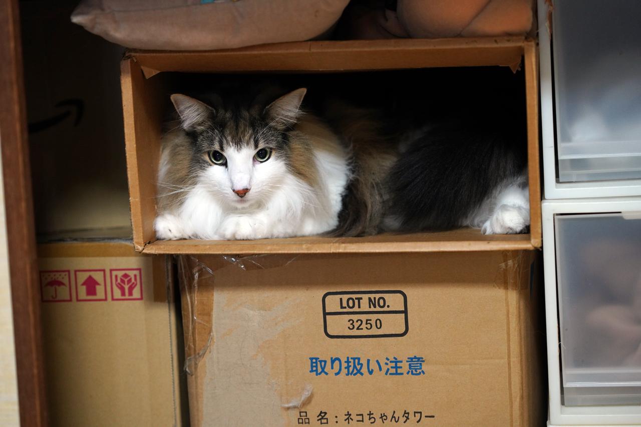 f:id:kazuhiro0214:20191223081404p:plain