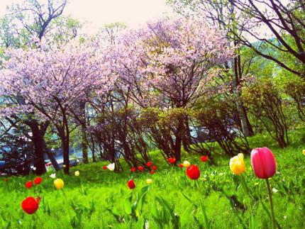 f:id:kazuki62:20120508215208j:image:w430