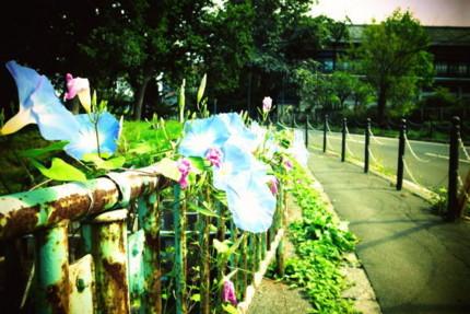 f:id:kazuki62:20121011122227j:image:w420