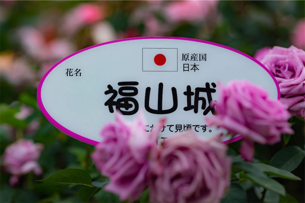 f:id:kazuki9404:20210209234745j:image