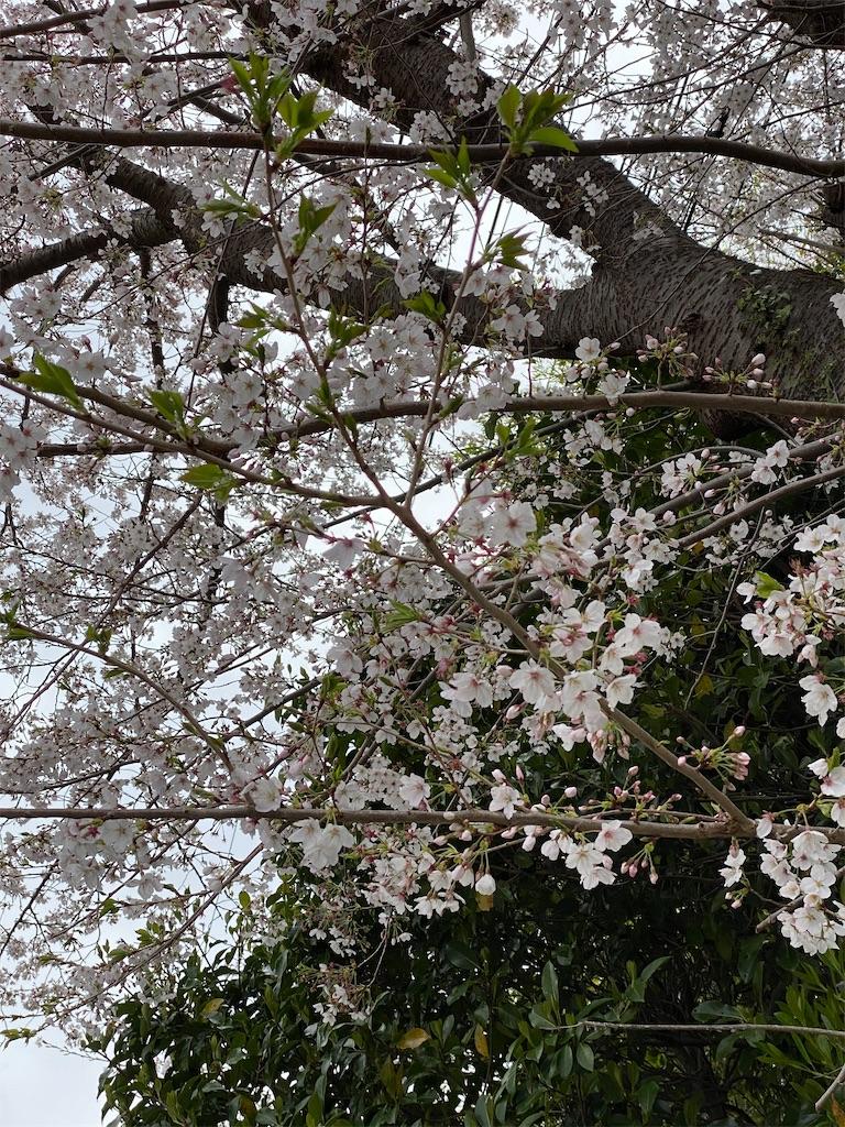 f:id:kazukichi1783:20200330212619j:image